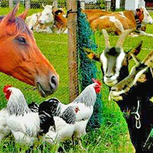 Farmyard with Goats, Chickens and a Horse